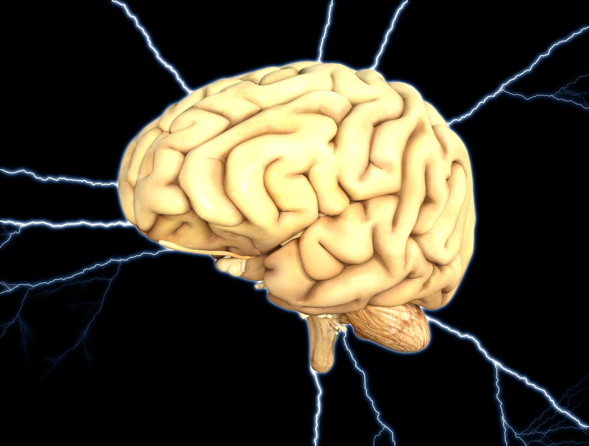 stimulezi creierul - sfatulparintilor.ro - pixabay_com - brain-1845940_1920