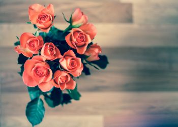 iubire horoscop - sfatulparintilor.ro - pixabay_com - roses-690085