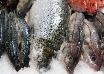 peste - sfatulparintilor.ro - pixabay_com - fish-1907691_1920