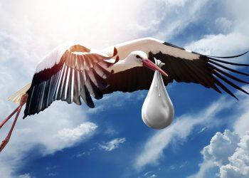 reguli pentru a concepe un copil - sfatulparintilor.ro - pixabay-com - bird-3058712_1920