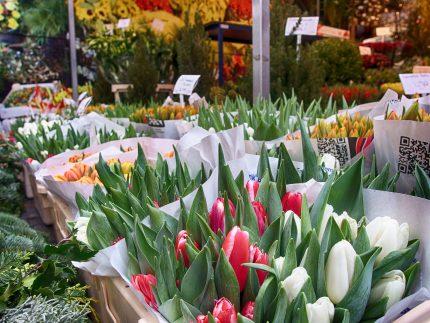 amsterdam lalele - sfatulparintilor.ro - pixabay_com - tulips-1904200_1920