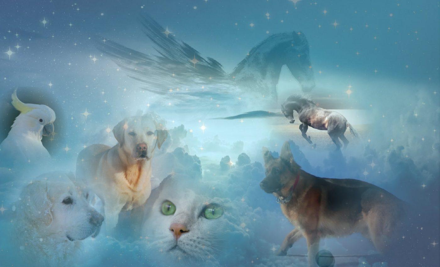 Moartea animalului de companie, fie el hamster, pisica, broasca testoasa, papagal sau caine, este un moment dureros pentru intreaga familie.