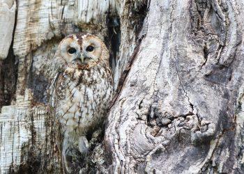 animale mesaje - sfatulparintilor.ro - pixabay_com owl-1576572_1920
