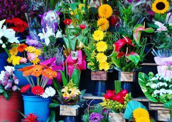 flori - florarie -sfatulparintilor.ro - pixabay_com - flowers-1384623