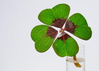 zodii ghinion august - sfatulparintilor.ro - pixabay_com - four-leaf-clover-1849858_1920