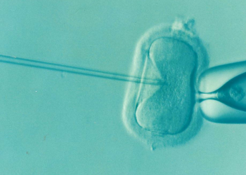 fertilizare in vitro - infertilitate - sfatulparintilor.ro - pixabay_com - ivf-1514174_1920