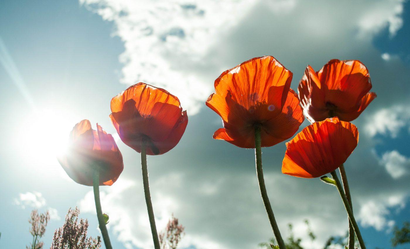 horoscop final vara - maci - sfatulparintilor.ro - pixabay_com - flower-399409