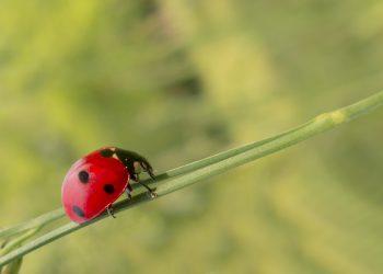 noroc august - sfatulparintilor.ro - pixabay_com - biological-181237