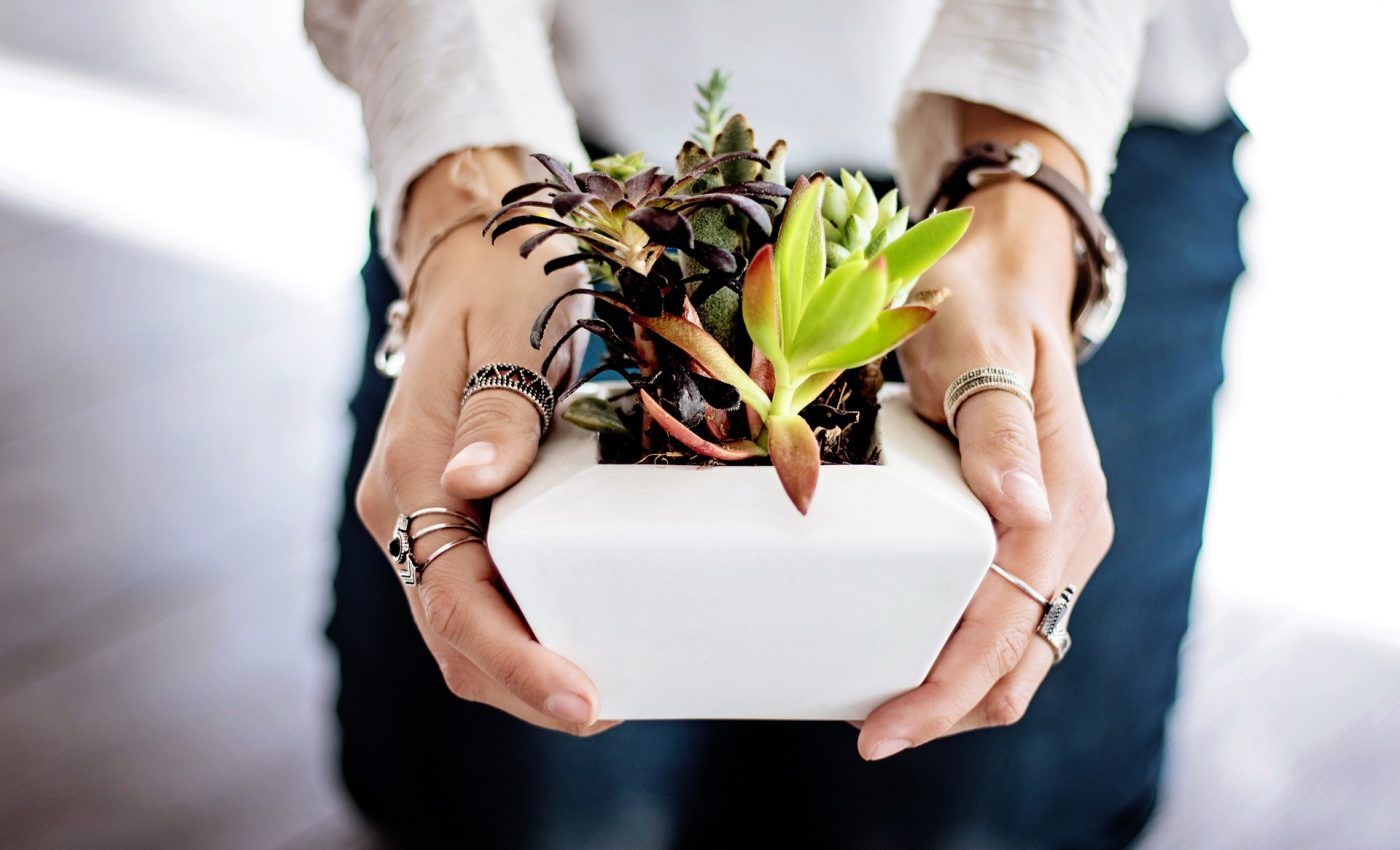 plante care racoresc casa