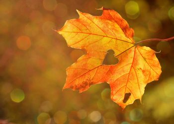 toamna inima -sfatulparintilor.ro - pixabay_com - heart-1776746_1920