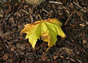septembrie - sfatulparintilor.ro - pixabay_com - leaf-1768603_1920