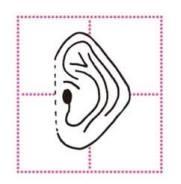 Urechi sub forma de diamant