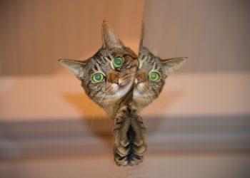pisica - sfatulparintilor.ro - pixabay_com - cat-697113_1920