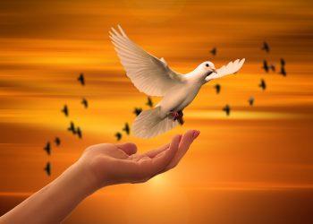 sufletul se reincarneaza - sfatulparintilor.ro - pixabay-com - dove-3426159_1920