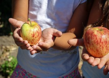 alimente copii - mere - sfatulparintilor.ro - pixabay_com - apple-1572648