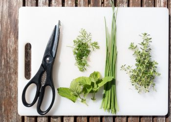 ierburi aromate - sfatulparintilor.ro - pixabay_com - spices-2419055_1920