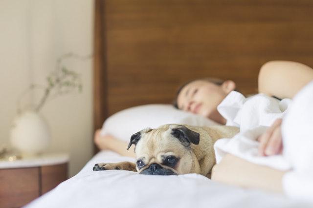 Pentru multe persoane in ziua de astazi a avea un somn de buna calitate si linistit este dorinta numarul 1 in lista de prioritati.