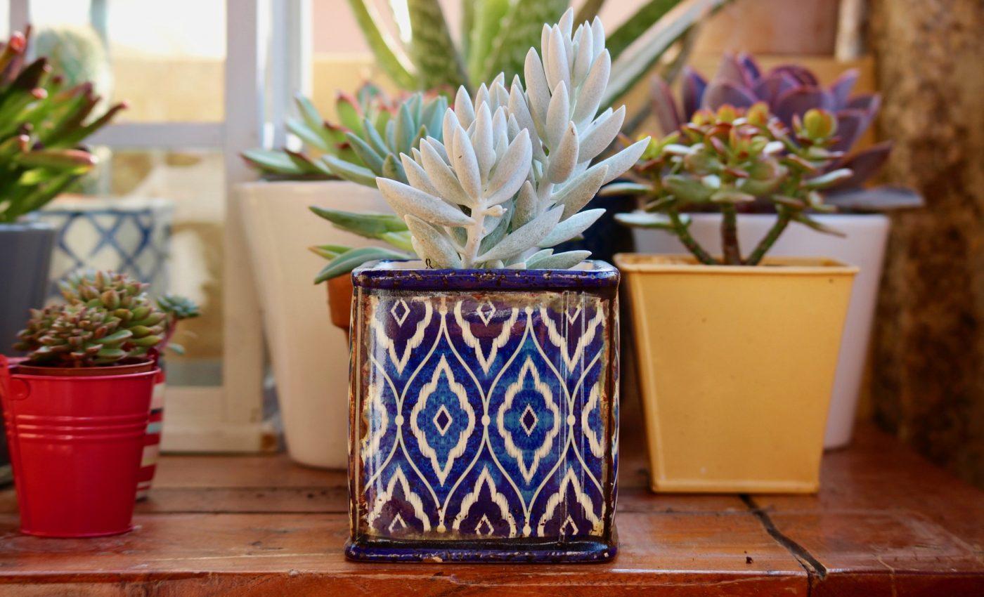 plante umiditate camera - sfatulparintilor.ro - pixabay_com - fat-plants-2734948_1920