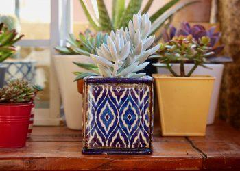 plante de apartament umiditate camera - sfatulparintilor.ro - pixabay_com - fat-plants-2734948_1920