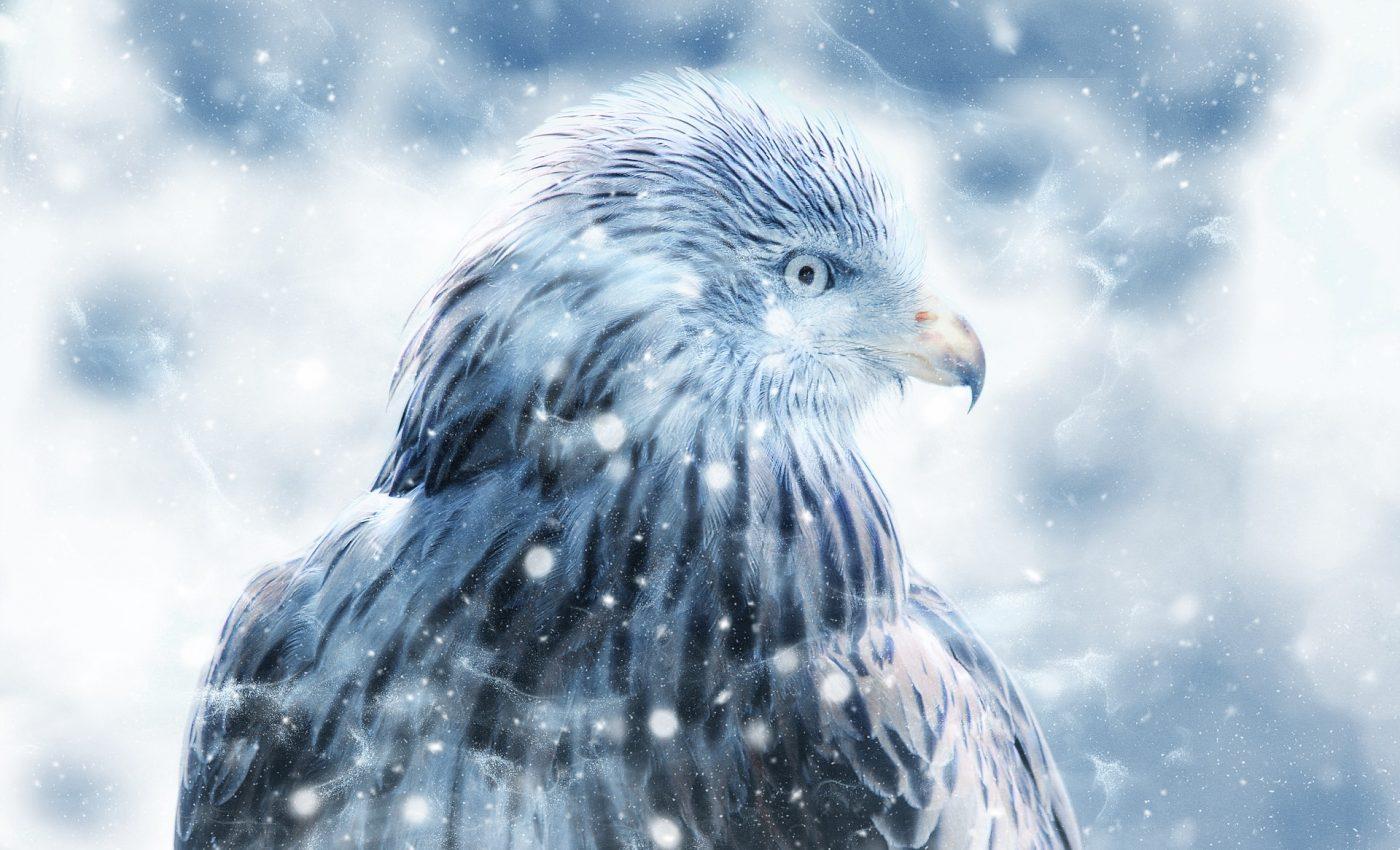 soim horoscop celtic - sfatulparintilor.ro - pixabay_com - bird-2456258_1920