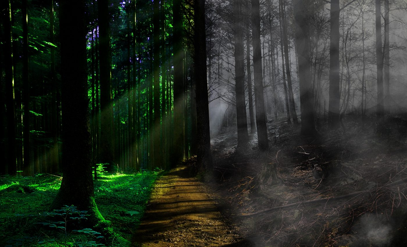 viata dupa moarte - sfatulparintilor.ro - pixabay_com - death-2433005