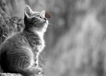 animale cu puteri tamaduitoare - sfatulparintilor.ro - pixabay_com - cat-2810383