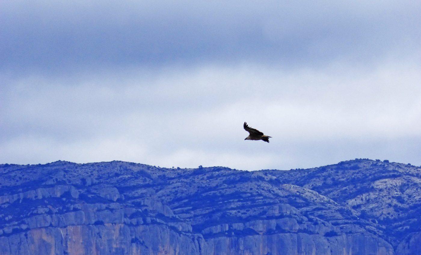 Povestea vulturului din Anzi