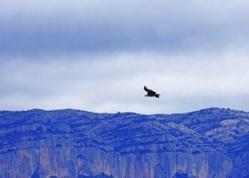 Povestea vulturului din Anzi. Ce decizie dureroasa trebuie sa ia