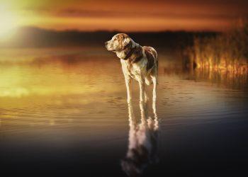 Ce inseamna cand visezi caini - sfatulparintilor.ro - pixabay_com - dog-3067595_1920