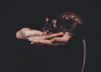 Ce inseamna cand visezi sobolani - sfatulparintilor.ro - pixabay_com - animals-2939607_1920