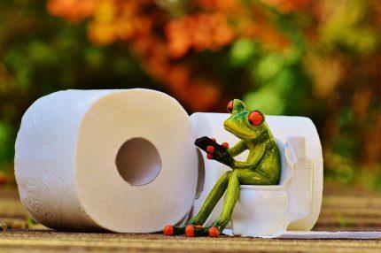 hemoroizi - sfatulparintilor.ro - pixabay_com - frog-1037247_1920