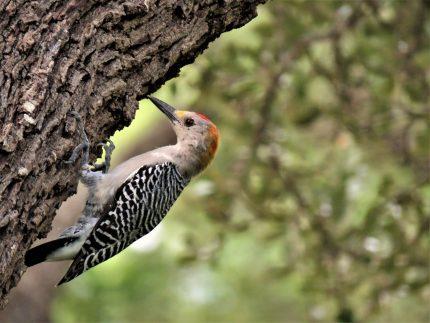Animalul asociat Spiritului - sfatulparintilor.ro - pixabay_com - bird-2827990_1920