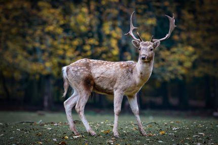 Animalul asociat Spiritului - sfatulparintilor.ro - pixabay_com - nature-2634729_1920