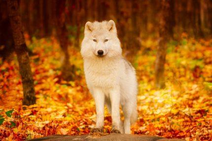 Animalul asociat Spiritului - sfatulparintilor.ro - pixabay_com - nature-3114065_1920