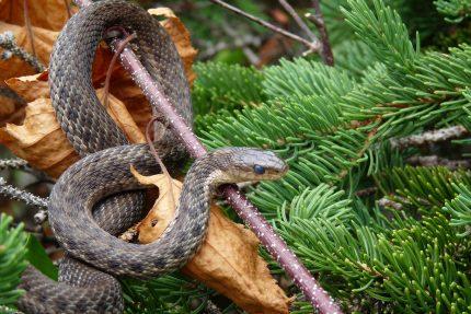 Animalul asociat Spiritului - sfatulparintilor.ro - pixabay_com - nature-3123972_1920