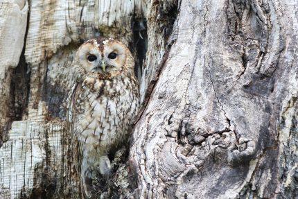 Animalul asociat Spiritului - sfatulparintilor.ro - pixabay_com - owl-1576572_1920