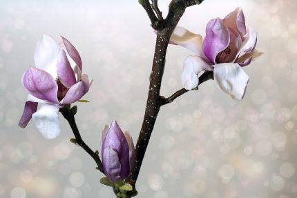 Mesaje si felicitari de 1 Martie- flower-3125755_1920
