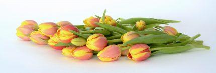 Mesaje si felicitari de 1 Martie- tulips-2101909_1920