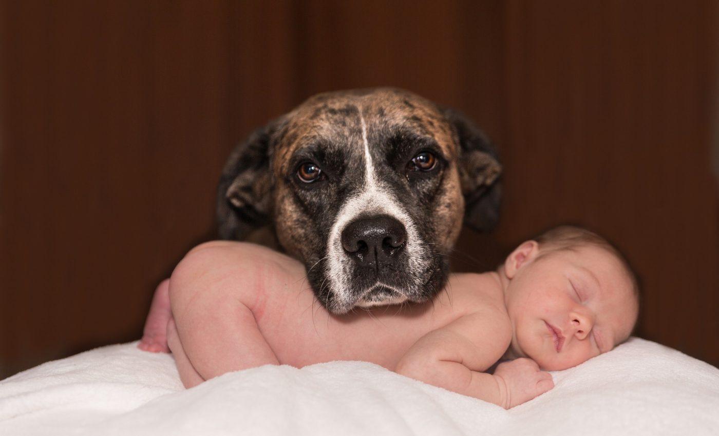 Bebelusul si catelul