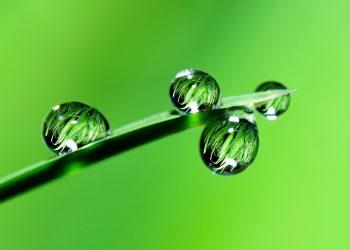feng shui plante de apartament - sfatulparintilor.ro - pixabay_com - water-2986837_1920