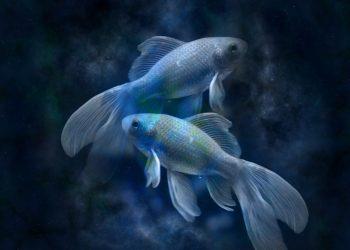 horoscop pesti - sfatulparintilor.ro - pixabay_com - horoscope-639125_1920