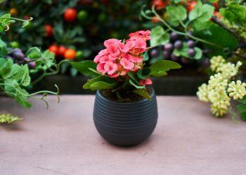 plante in casa