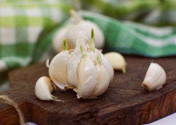 usturoi - sfatulparintilor.ro - pixabay_com - garlic-3084483_1920