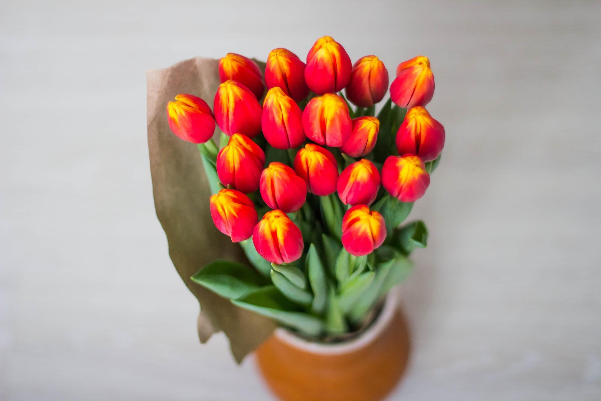 Felicitari de 8 martie pentru mame - sfatulparintilor.ro - pixabay_COM - tulips-1228319_1920