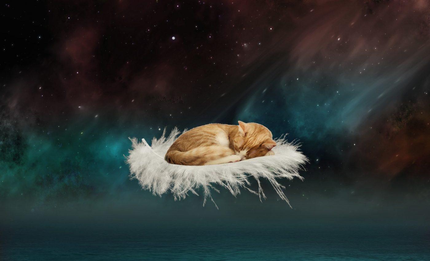 ce inseamna cand visezi pisici - sfatulparintilor.ro - pixabay_com - fantasy-3134400_1920