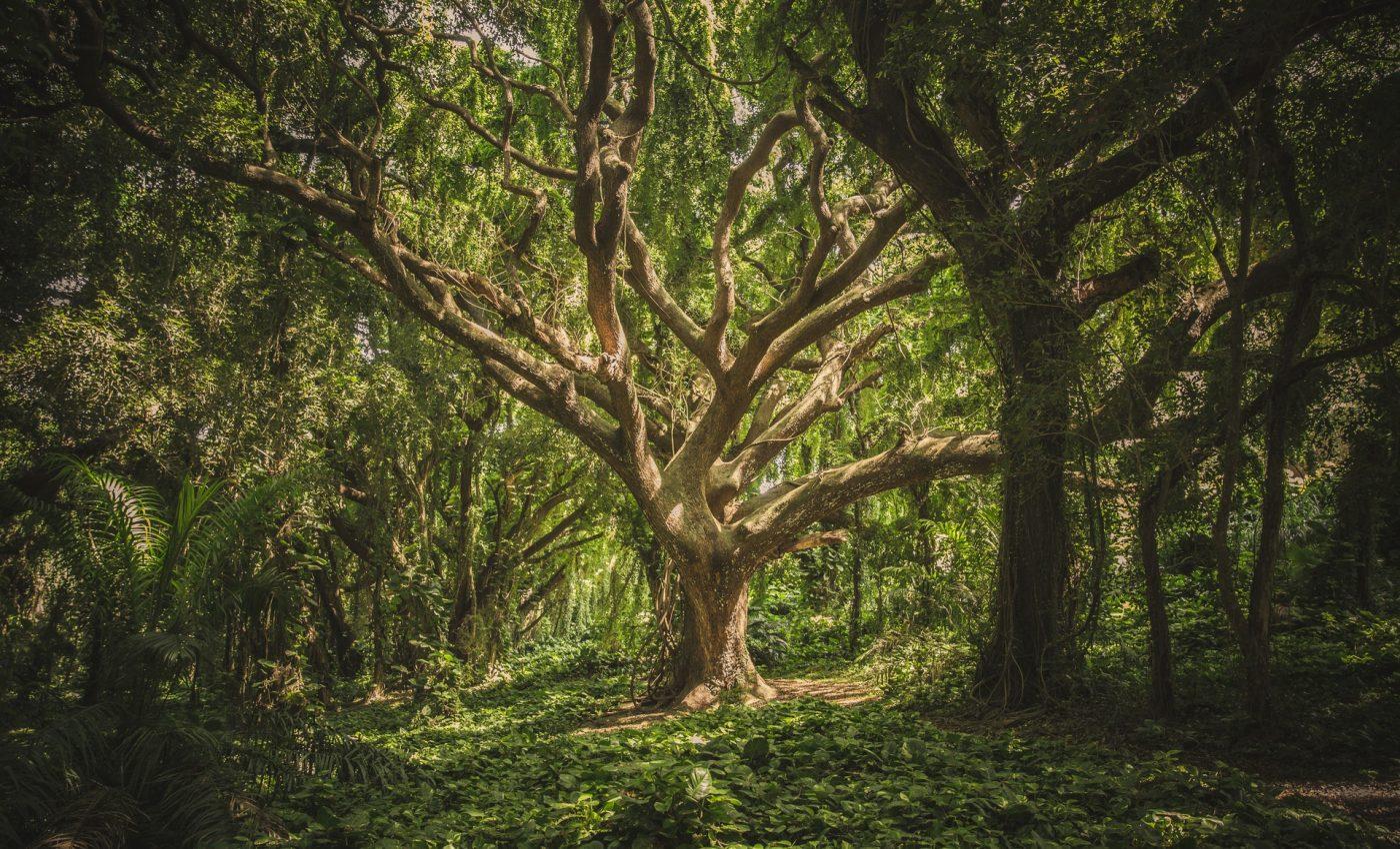copacul vietii - sfatulparintilor.ro - pixabay_com - pexels-photo-38136