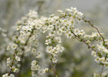 echinoctiul de primavara - sfatulparintilor.ro - pixabay_com - birds-flowers-2149275