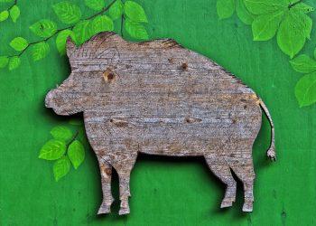 horoscop chinezesc anul mistretului - sfatulparintilor.ro- pixabay_com - boar-3223855_1920