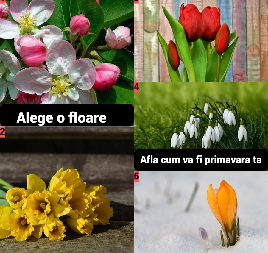 Testul florilor