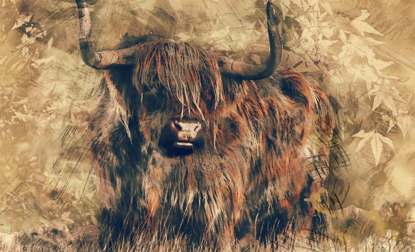 horoscop taur - sfatulparintilor.ro - pixabay_com - bull-1601709_1920
